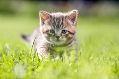 Young cat in green grass stock photography