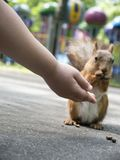 Young baby girl hand with open palm feeding squirrel with unfocused colorful park attractions at background front view. Young baby girl hand with open palm royalty free stock image