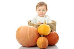 Young baby girl with pumpkins Stock Image