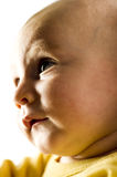 Young baby looking Royalty Free Stock Images