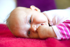 young baby lying on tummy Royalty Free Stock Photos