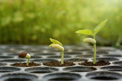 Young baby plants Royalty Free Stock Photo