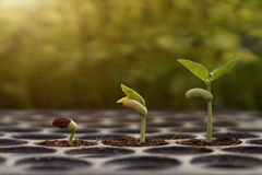 Young baby plants Stock Photos