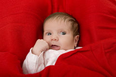 Young baby Royalty Free Stock Images