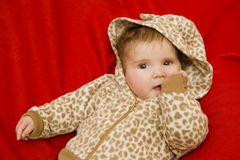 Young baby portrait Stock Image