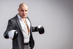 A young bald man in suit. A young bald man in an unbuttoned white shirt, gray suit and boxing gloves looks defiantly into the camera and posing on a white stock photo