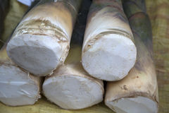 Young bamboo shoots Stock Photos