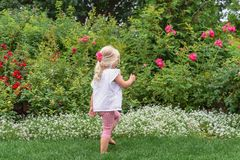 Young barefoot girl walking through a rose garden stock image