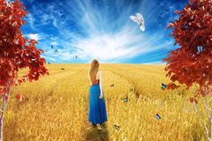 Young barefoot woman in dress standing walking through open wheat field Stock Photos