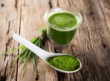 Young barley and chlorella spirulina. Stock Image