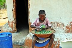Young Batonka Girl Cutting Spinach, Gokwe North, Zimbabwe. This young girl belongs to the Batonka tribe who originally straddled the Zambezi River in both Stock Photography
