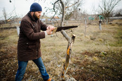 The young bearded man saws dry branches of fruit trees. Stock Images