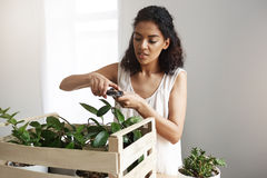 Young beautiful african female botanist cutting plant stems at workplace. Copy space. Stock Photography