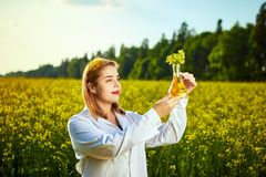 A young beautiful biologist or agronomist examines the quality of rapeseed oil on a rape field. Agribusiness concept. A young beautiful biologist or agronomist royalty free stock photos