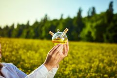 A young beautiful biologist or agronomist examines the quality of rapeseed oil on a rape field. Agribusiness concept. A young beautiful biologist or agronomist stock image