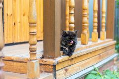 The young beautiful cat attentively looks and licks lips. The cat lies on a threshold old old rural at home.  royalty free stock photos