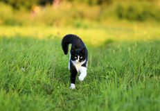 Beautiful cat is cheerfully and quickly runs along a green juicy Stock Images