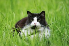 Young beautiful cat lying in the grass on a green meadow on a Sunny spring day stock photography