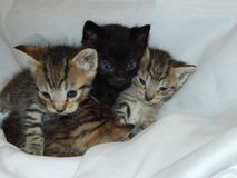 Young beautiful cats stock photo