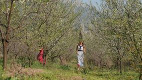 Young beautiful women in long dresses playing catch up in spring blossom garden. Young beautiful caucasian women in long dress in bay leaf wreath playing catch stock video footage
