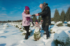 Young beautiful family in bright clothes choosing a Christmas tree, snow, lifestyle, winter holidays Stock Image