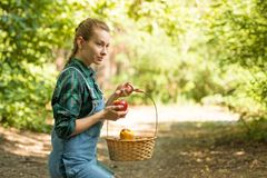 Young beautiful farm girl is harvesting apples. The concept of summer or autumn harvest. With empty space for writing.  royalty free stock image