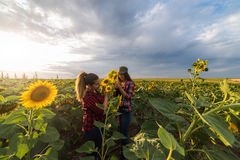 Young beautiful farmer girls examining crop of sunflowers in fie Stock Photos