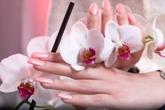 Woman hands with pink spring manicure on nails holding white orchids flower in hands in beauty salon. Young beautiful female hands with pink spring manicure on royalty free stock image