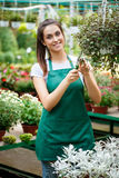 Young beautiful florist taking care of flowers over blury outdoor background. Royalty Free Stock Photo
