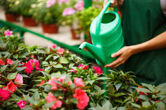 Young beautiful florist watering flowers over blury outdoor background. Royalty Free Stock Photo
