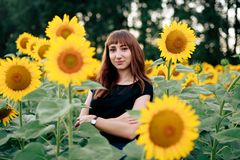 A young beautiful girl against the background of sunflowers stock image