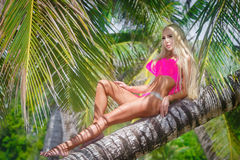 Young beautiful girl in bikini on the palm tree on a tropical be royalty free stock images