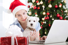 Young beautiful girl with dog christmastime. Young beautiful girl with white dog christmastime stock images