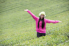 Young beautiful girl in the field Stock Photography