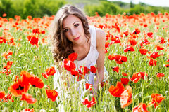 Young beautiful girl in the field of poppies Stock Photography