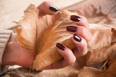 Woman hands with brown gel nails polish holds dry fall leaf on wooden and leaves. Young beautiful girl hands with brown gel nails polish holds dry fall leaf on royalty free stock photo