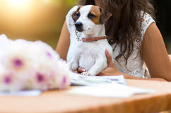 Young, beautiful girl has received a long-awaited gift - dog bre Royalty Free Stock Photos