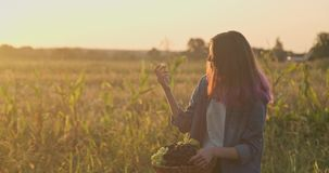 Young beautiful girl holding basket of organic fresh grapes and eating grapes. Rustic style, natural landscape golden hour stock video
