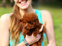 Young beautiful girl holding a cute brown puppy. The girl smiles. Royalty Free Stock Photo