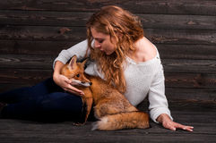 A young beautiful girl holding a wild fox animal that was traumatized by a man and rescued by her and now lives as before Royalty Free Stock Image