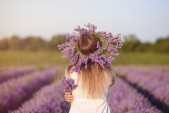 Young,beautiful girl in lavender field Royalty Free Stock Images