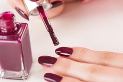 Female with paint brush and bottle applying red wine manicure nails polish on finger. Young beautiful girl with paint brush and bottle applying red wine manicure royalty free stock photos
