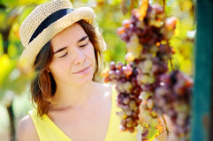 Young beautiful girl picking mellow grape in sunny day in Italy Stock Photos