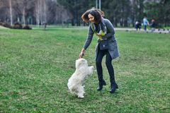 Young beautiful girl playing with her dog Royalty Free Stock Image