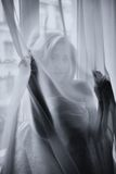 The young beautiful girl poses behind a curtain Royalty Free Stock Photo