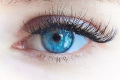 Young beautiful girl`s eye with big lashes. Macro shot of beautiful eye with artificial big lashes royalty free stock images