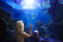 A young beautiful girl standing in front of a big shark and  looking at it Royalty Free Stock Image