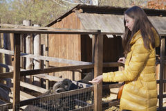 Young beautiful girl stands near the aviary with lamb in city zo. O on sunny autumn day Royalty Free Stock Photos