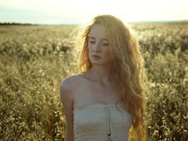 Young beautiful girl on a summer field Royalty Free Stock Photos