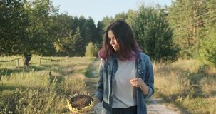 Young beautiful girl walking with ripe sunflower with sunflower seeds, nature, sunset landscape stock video footage